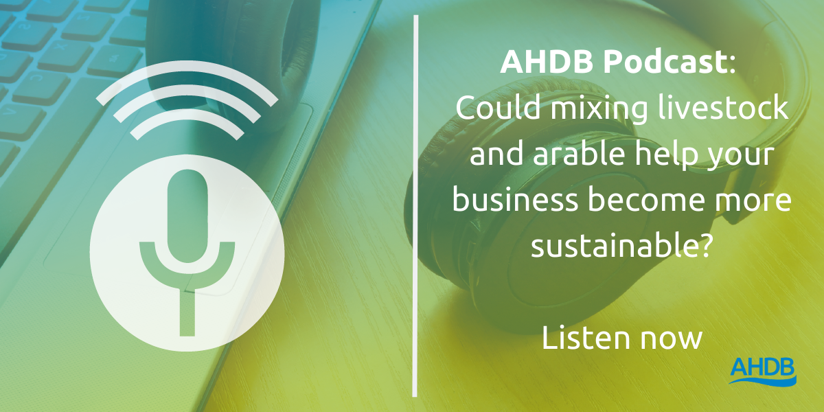 Listen to this podcast about mixing livestock and arable to help improve the sustainability of your business