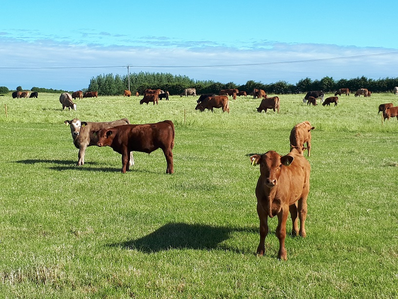 Weaned calves grazing for the first time are most at risk from worms