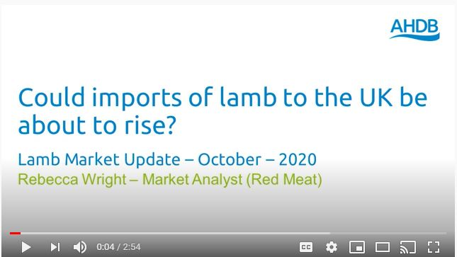 Lamb market update video